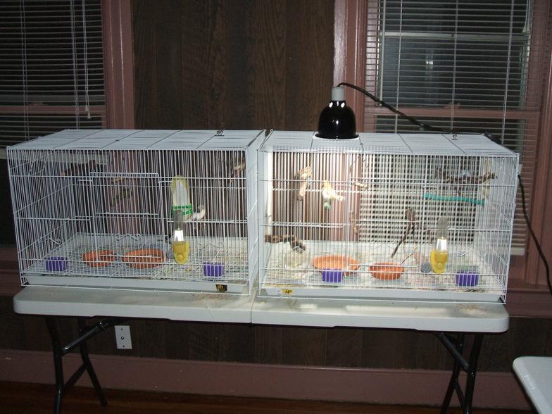 Pet Finches Cage | www.pixshark.com - Images Galleries ...